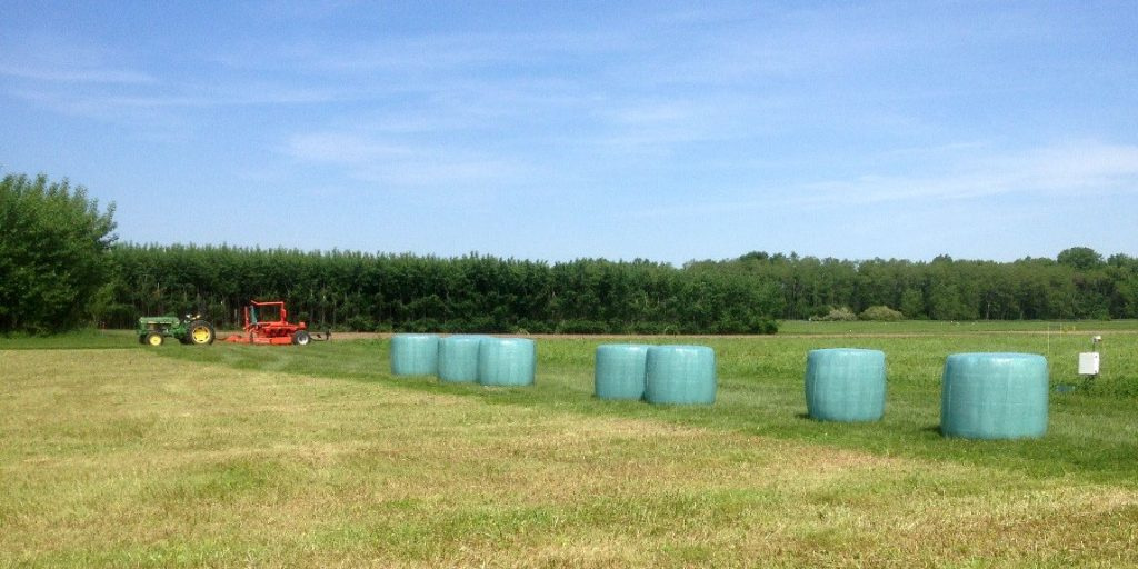 Several plastic-wrapped units of baleage sit in a field with a tractor in the background.